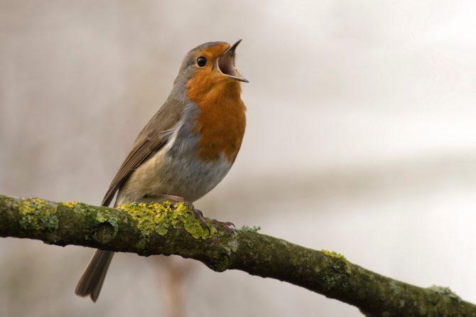 Ne fogadjuk csak úgy el, ha nem halljuk a tavasz hangjait!
